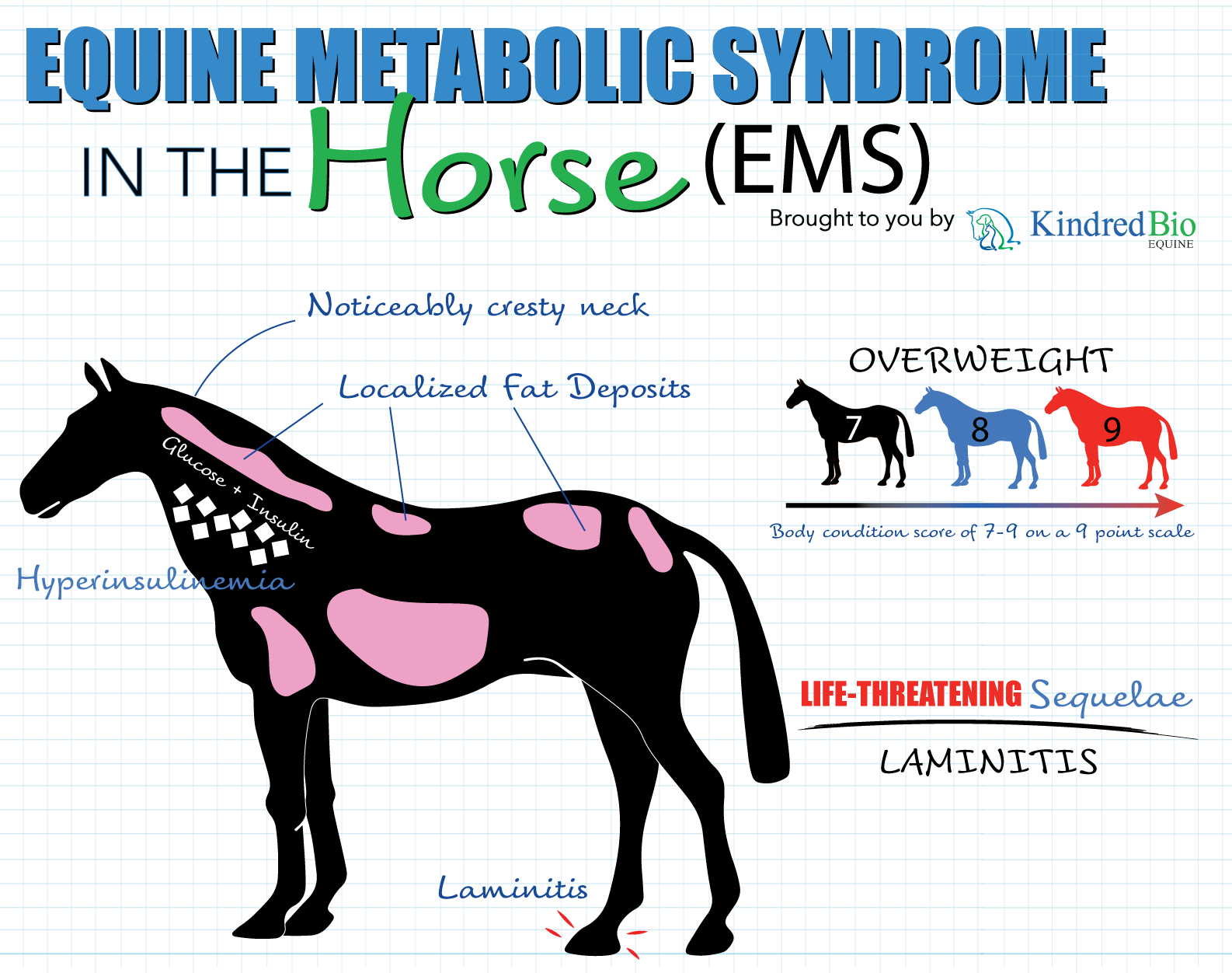 equine metabolic syndrome, egus